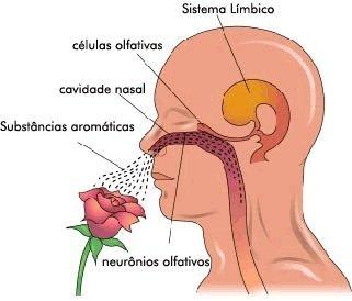 como funciona a memoria olfativa